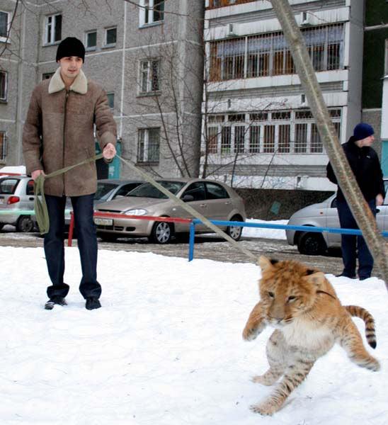 http://www.ecosystema.ru/01welcome/articles/nazarov/218.jpg