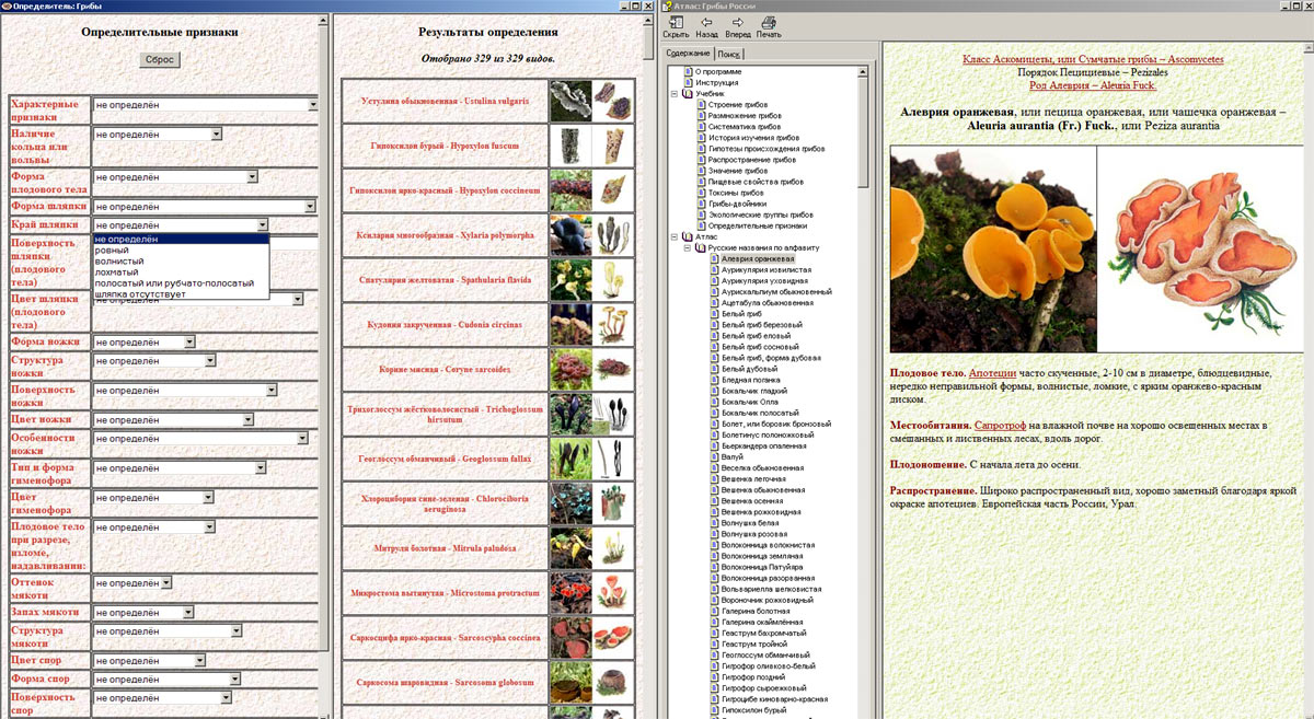 Компьютерный определитель грибов: интерфейс программы