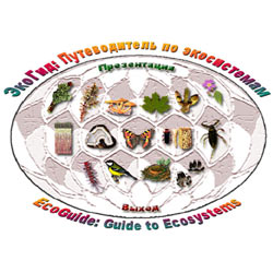 Компьютерный определитель водорослей: обложка диска