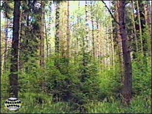 Изучение вертикальной структуры леса