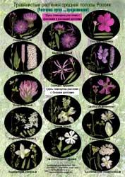Растения лугов - 2 стр.