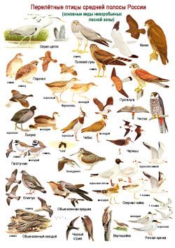 Птицы Подмосковья (список)