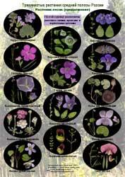 Растения лесов - 2 стр.