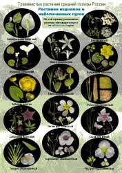 Растения водоемов - 1 стр.