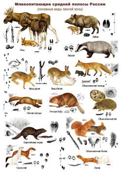 Млекопитающие - 1 стр.