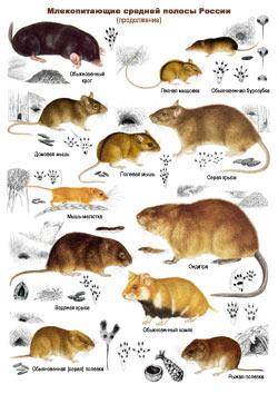 Млекопитающие - 2 стр.