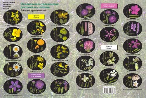 Определитель травянистых растений по цветкам: растения лугов и полей