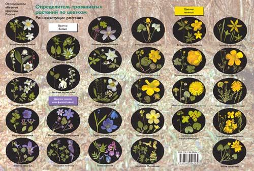 Определитель травянистых растений по цветкам: раннецветущие растения