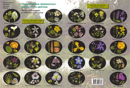 Определитель травянистых растений по цветкам: растения водоемов и заболоченных лугов