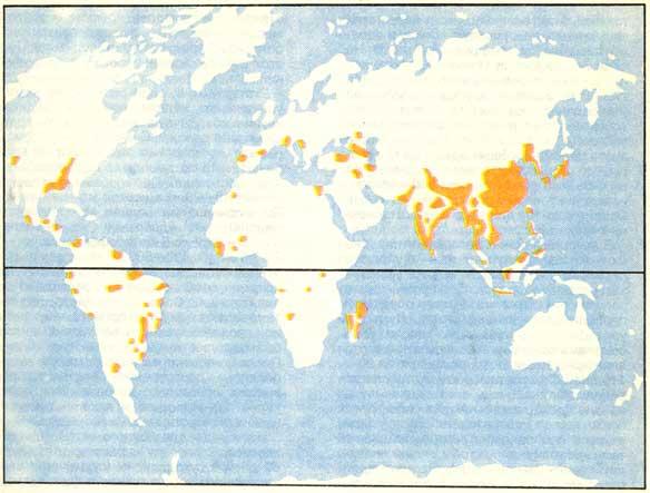 Районы возделывания риса