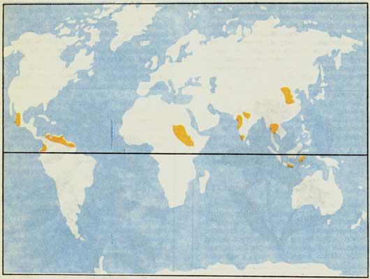 Районы возделывания кунжута