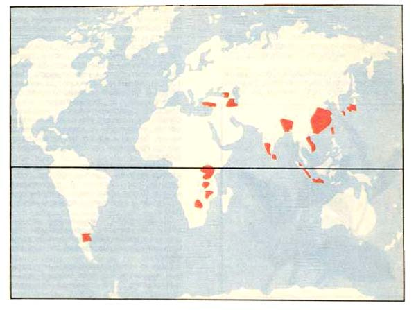 Районы возделывания чая