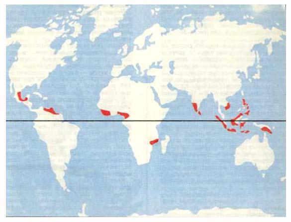Районы возделывания кокосовой пальмы