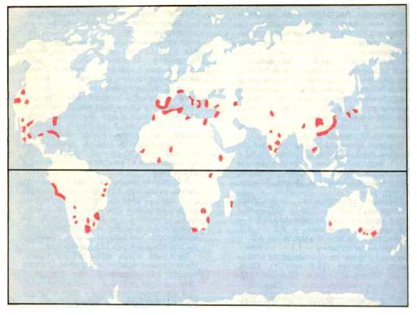 Районы возделывания цитрусовых