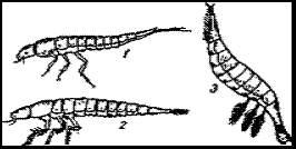 Личинки плавунчика и других водных жуков. Ест. вел. 1 — гребца (Agabus); 2 — прудовика (Colymbetes fuecus); 3 — плавунчика (Aciliiu sulcatus)