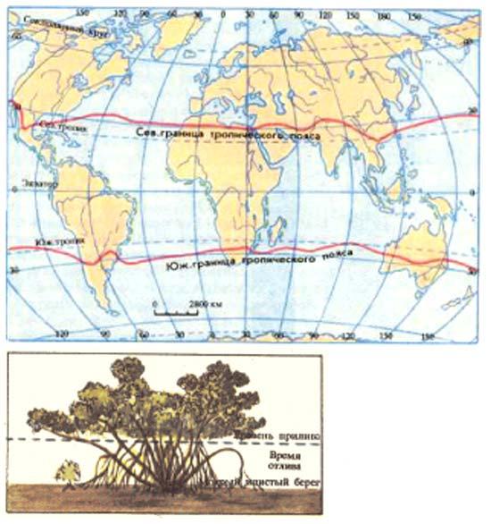 Смотрите фотографии мангров вразделе