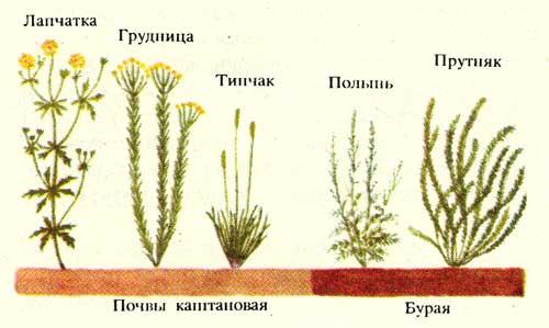 http://www.ecosystema.ru/07referats/slovgeo/img/650.jpg