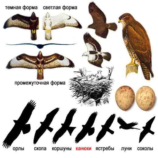 Птицы анимашки, Птицы картинки. анимационные картинки Птицы, открытки.