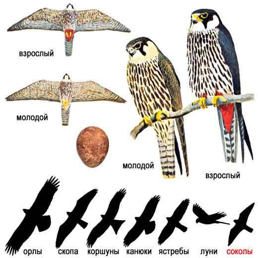 quot;Зимующие птицы.  Голоса птиц средней полосы.