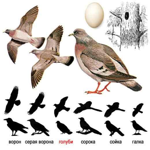 Эта картинка расположено в рубрике: фото и названия птиц