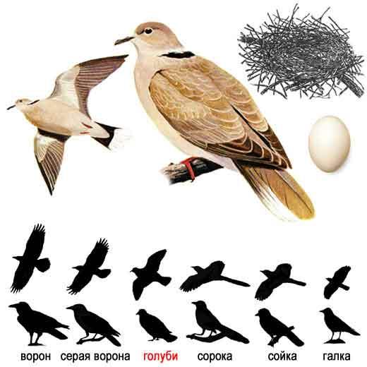 перелетные птицы картинки хорошего качества.