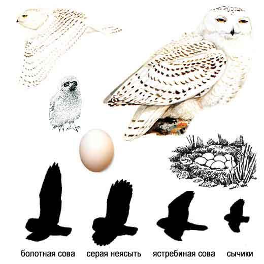 b Голоса птиц /b- Птицы b средней полосы /b.