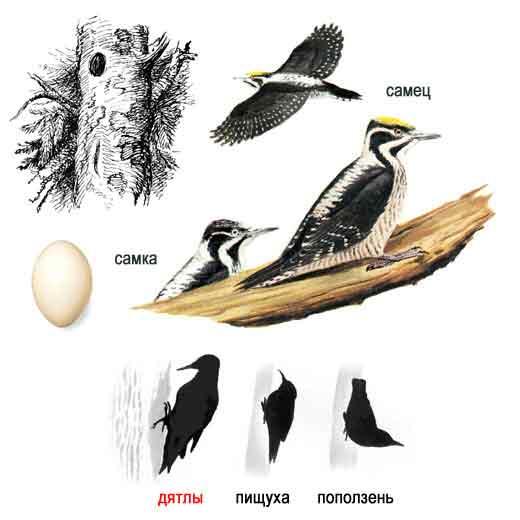 перелетные птицы для детей.