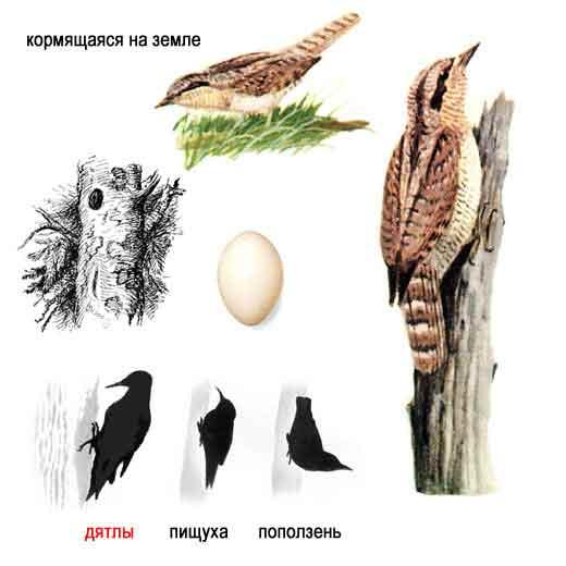зимующие птицы ленинградской области.