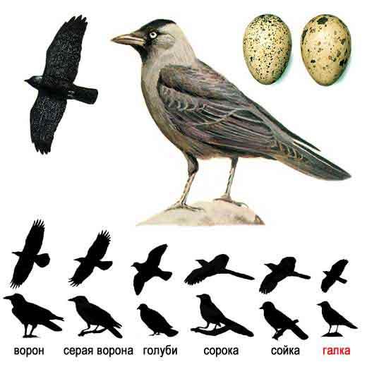 Фото воробей птицы