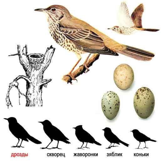 зимующие птицы центральной полосы фото.