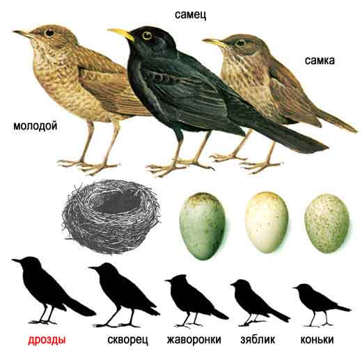 Птицы вокруг