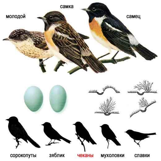 """"""",""""www.ecosystema.ru"""