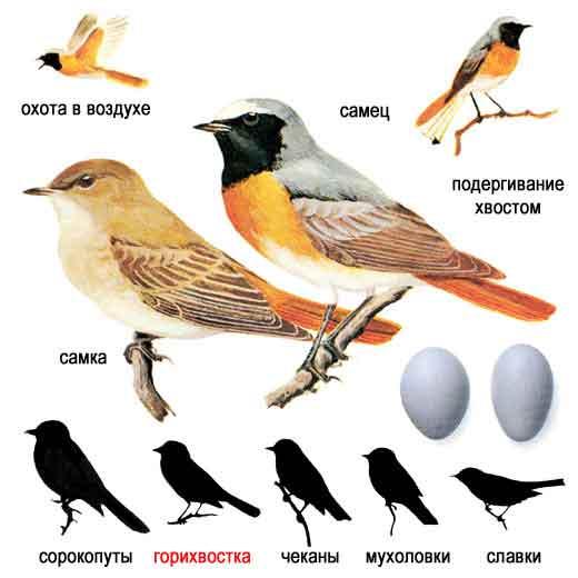 """""""Зимующие птицы """".   """"Голоса птиц средней полосы """""""