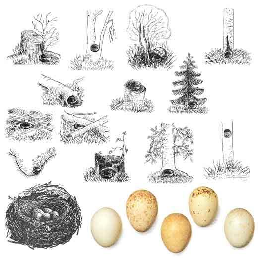 гнездо рисунок: