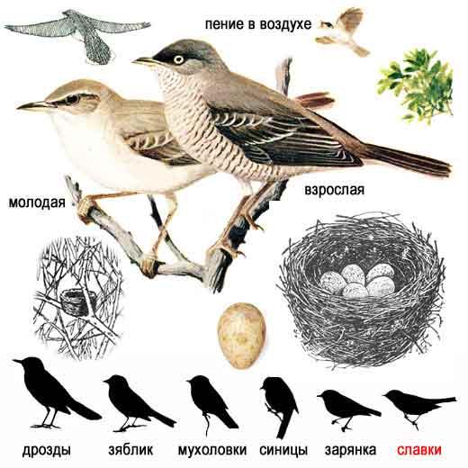 Плакат школьный Перелетные и зимующие птицы 50х