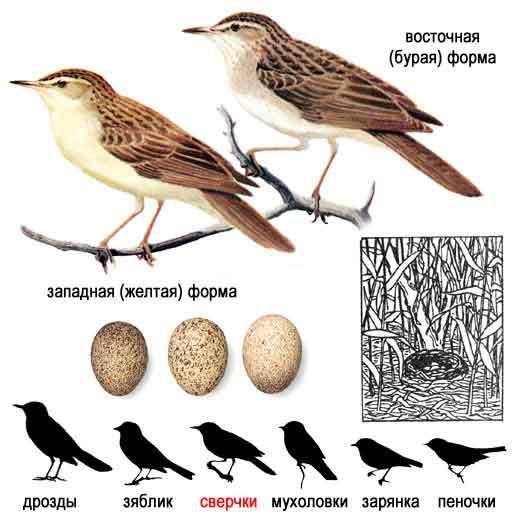 виды птиц с фото средней полосы.