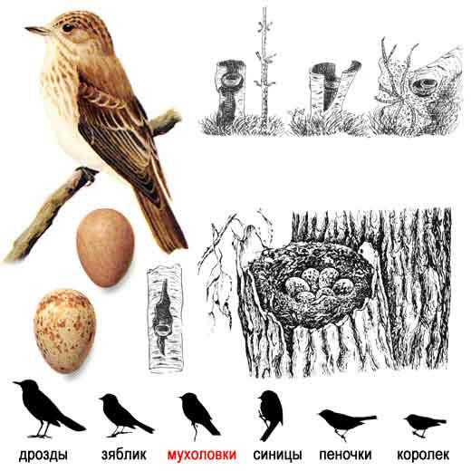 Эта картинка вы можете найти в разделах: птицы нижегородской области фото.