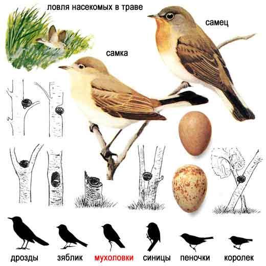 Перелетные птицы ленинградской