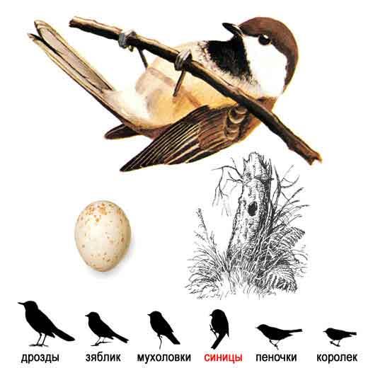 Эта картинка вы найдете в архивах: певчие птицы урала.