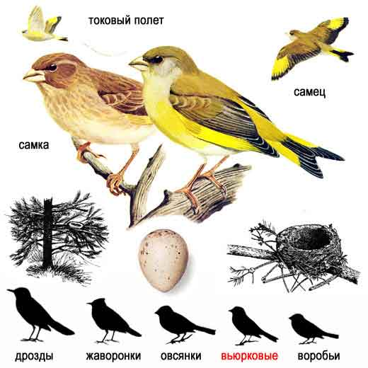 """""""Перелетные птицы """". цветные ламинированные определительные таблицы."""