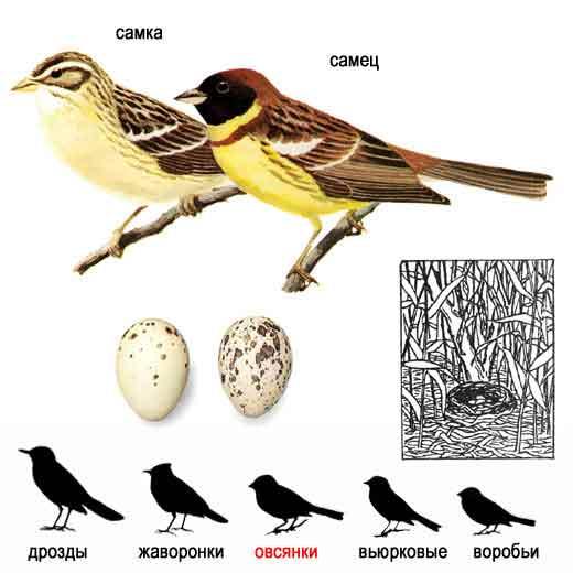 ...красивые фото перелетных птиц, домашнии птицы и птицы
