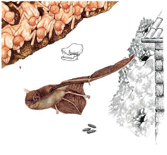 http://www.ecosystema.ru/08nature/mamm/042.jpg