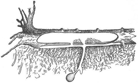 Зимовочная нора бурундука.