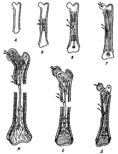 кости пресмыкающихся
