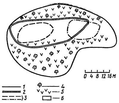 Индивидуальные участки хоросанской агамы Agama erythrogaster в Бадхызе