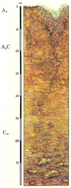 Профиль пустынно-арктических почв