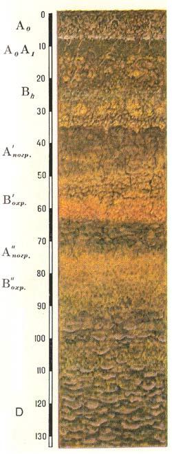 Профиль охристых (собственно) вулканических почв
