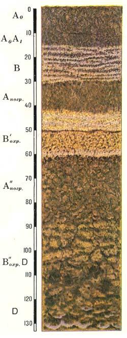 Профиль светло-охристых вулканических почв