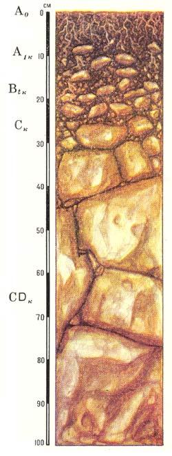 Профиль дерново-карбонатных типичных почв