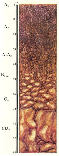 Профиль дерново-карбонатных выщелоченных почв